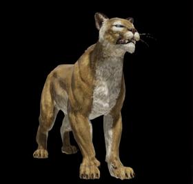 meilleur authentique ac6e8 3ccdd Prairie Puma - Official Bless Online Wiki