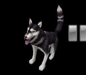 Husky1 t.jpg
