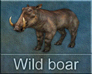 Call image for Wild boar