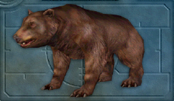 Menu image of Bear