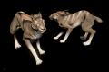 Canis Rabbit model earlyview.png