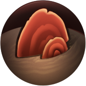 Resource Fungus.png