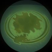 Resource Algae.png