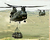 CNCG Chinook Cameo.png