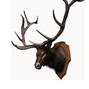 麋鹿战利品