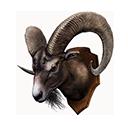 Mountain Goat Trophy