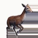 Taxidermied Deer