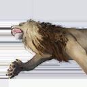 Lion Carcass