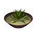 Aloe Soup