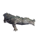 Taxidermied Crocodile