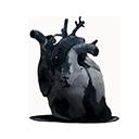 金斯告的心脏