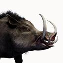 Greater Boar