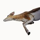 Gazelle Carcass