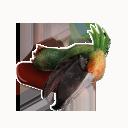 Shoebill Head