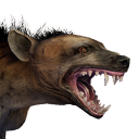 Tamed Spotted Hyena