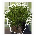 Decorative Planter (Hops)