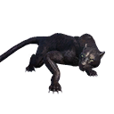 Taxidermied Panther