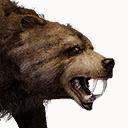Tamed Bear