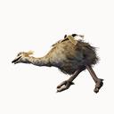 Ostrich Carcass