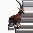 Taxidermied Gazelle