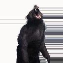 Taxidermied Bear