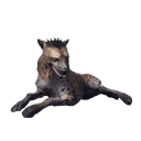 Taxidermied Hyena