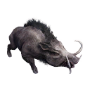 Taxidermied Boar