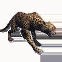Taxidermied Jaguar