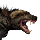Tamed Striped Hyena