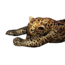 Jaguar Carcass
