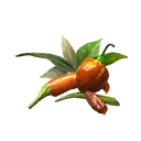 Rare Spice