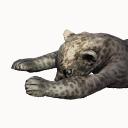 Sabretooth Carcass