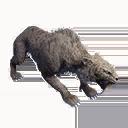 Taxidermied Sabretooth