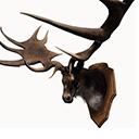 麋鹿王战利品