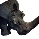 Greater Rhinoceros