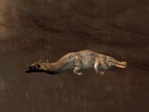 Greater Crocodile
