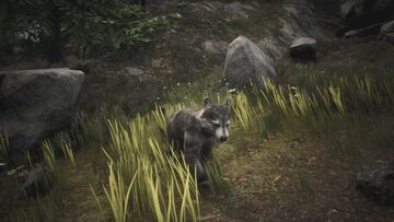 Wolf puppy 2.jpg
