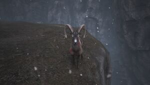 Angry Mountain Goat