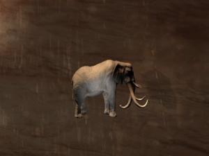 Greater Elephant