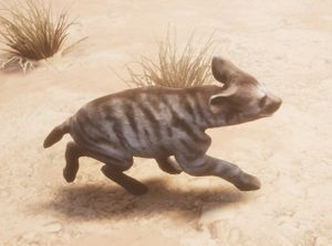 Striped Hyena Cub
