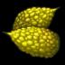 Milkmelon Icon.png