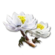 Icon snow lotus.png