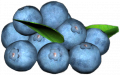 Blue-coloured Berries.png