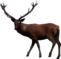 Stag.png