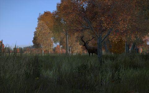 Deer 2a.jpg
