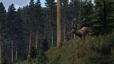 Deer 2b.jpg