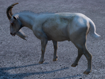 Goat White.png