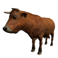 Bull Brown.png