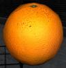 Fresh Orange.png