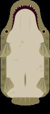 Alligator Gar.png
